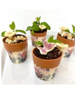 4pcs Edible Plants by NJD - Small
