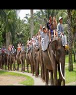 Al Arabi Travel Agency  Elephant Safari Ride in Bali Contribution