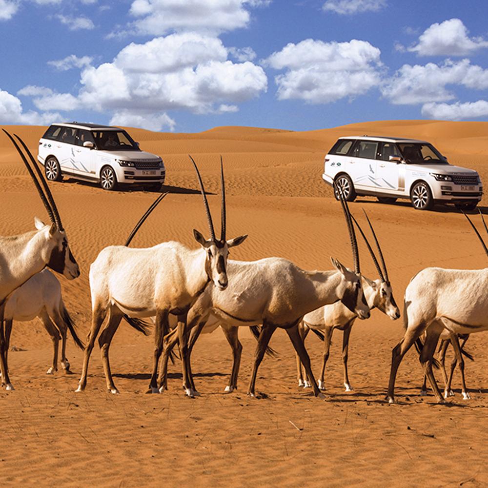 Platinum Luxury Desert Safari - Child (5-11yo)