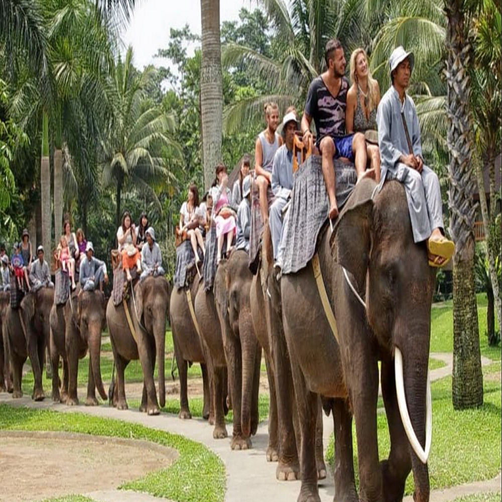 Al Arabi Travel Agency  Elephant Safari Ride in Bali Contribution