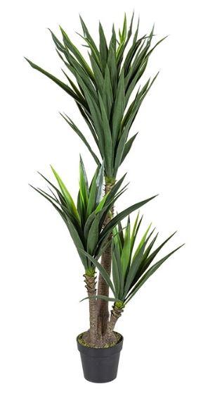 Yucca Tree w/ Pot